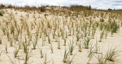 Década de Naciones Unidas sobre la Restauración de los Ecosistemas 2021-2030