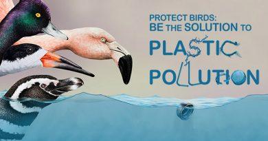 Protege las aves: haz algo práctico contra la contaminación por plásticos