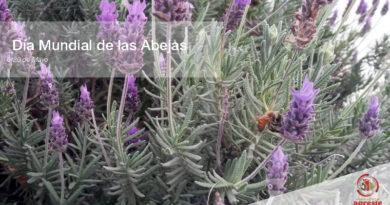 Biodiversidad y seguridad alimentaria, no hay vida sin abejas